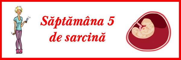 saptamana-5-de-sarcina