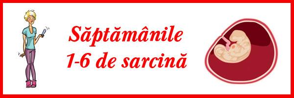 saptamanile-1-6-de-sarcina