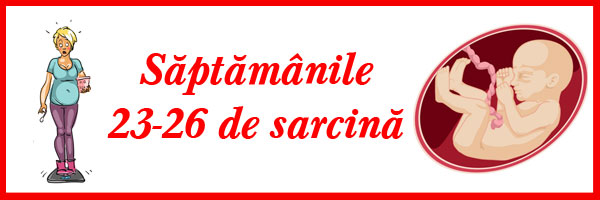 saptamanile-23-26-de-sarcina